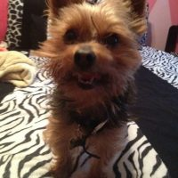 Lost Yorky